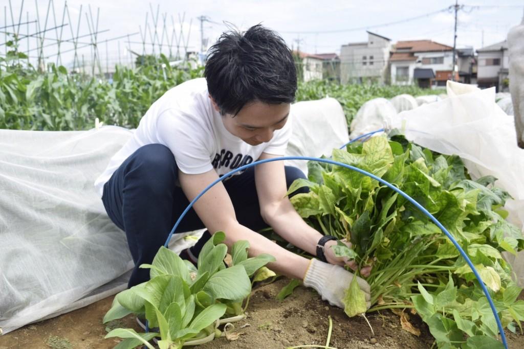 新鮮野菜を採りまくろう会9