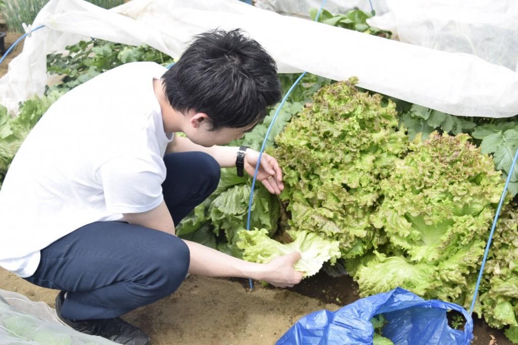 新鮮野菜を採りまくろう会2