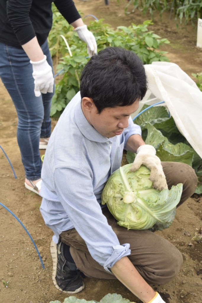 キャベツ収穫会